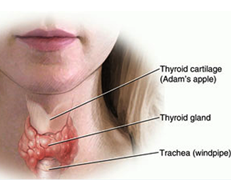 Thyroid Abnormalities